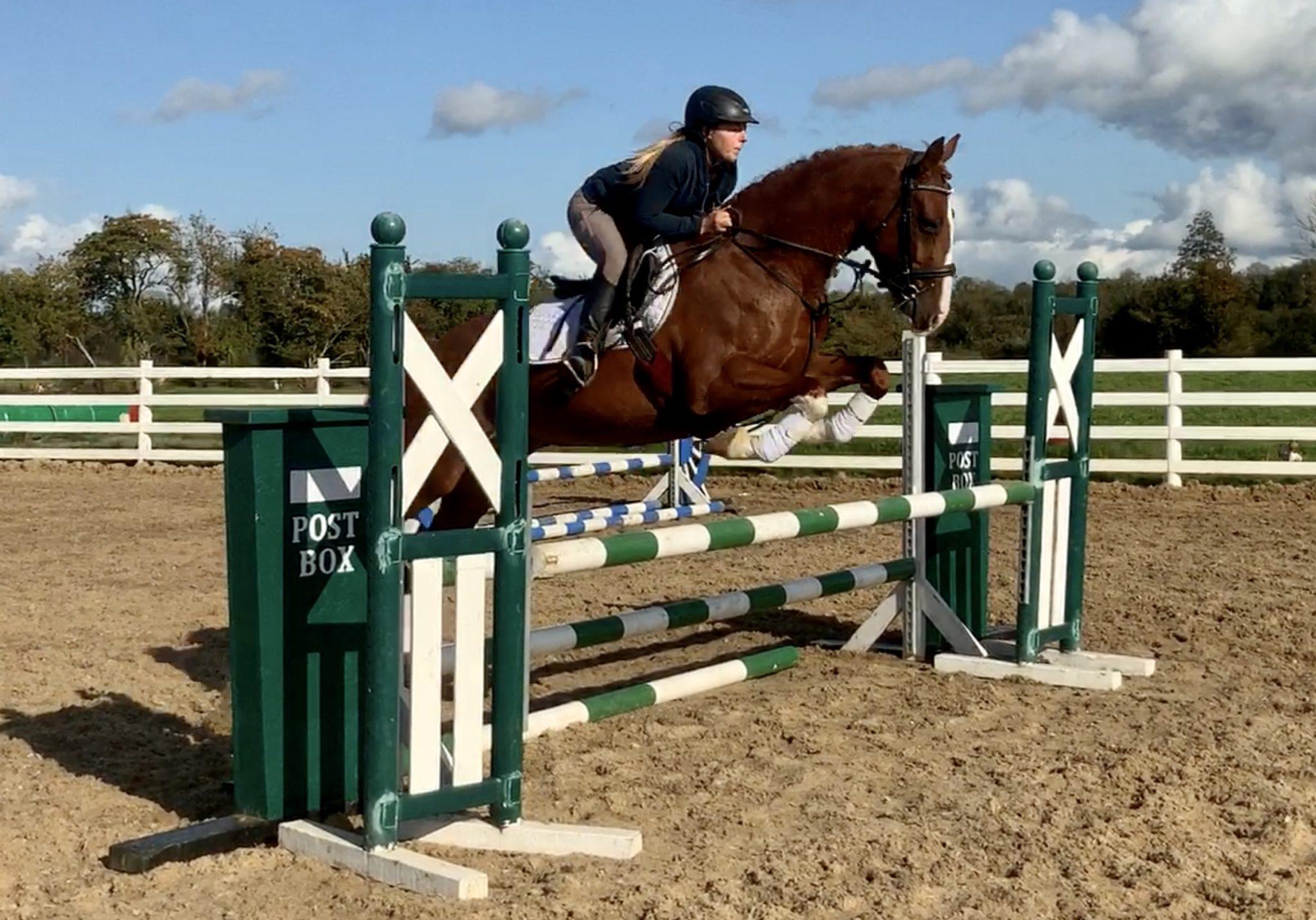 Dreamer - a dream horse!