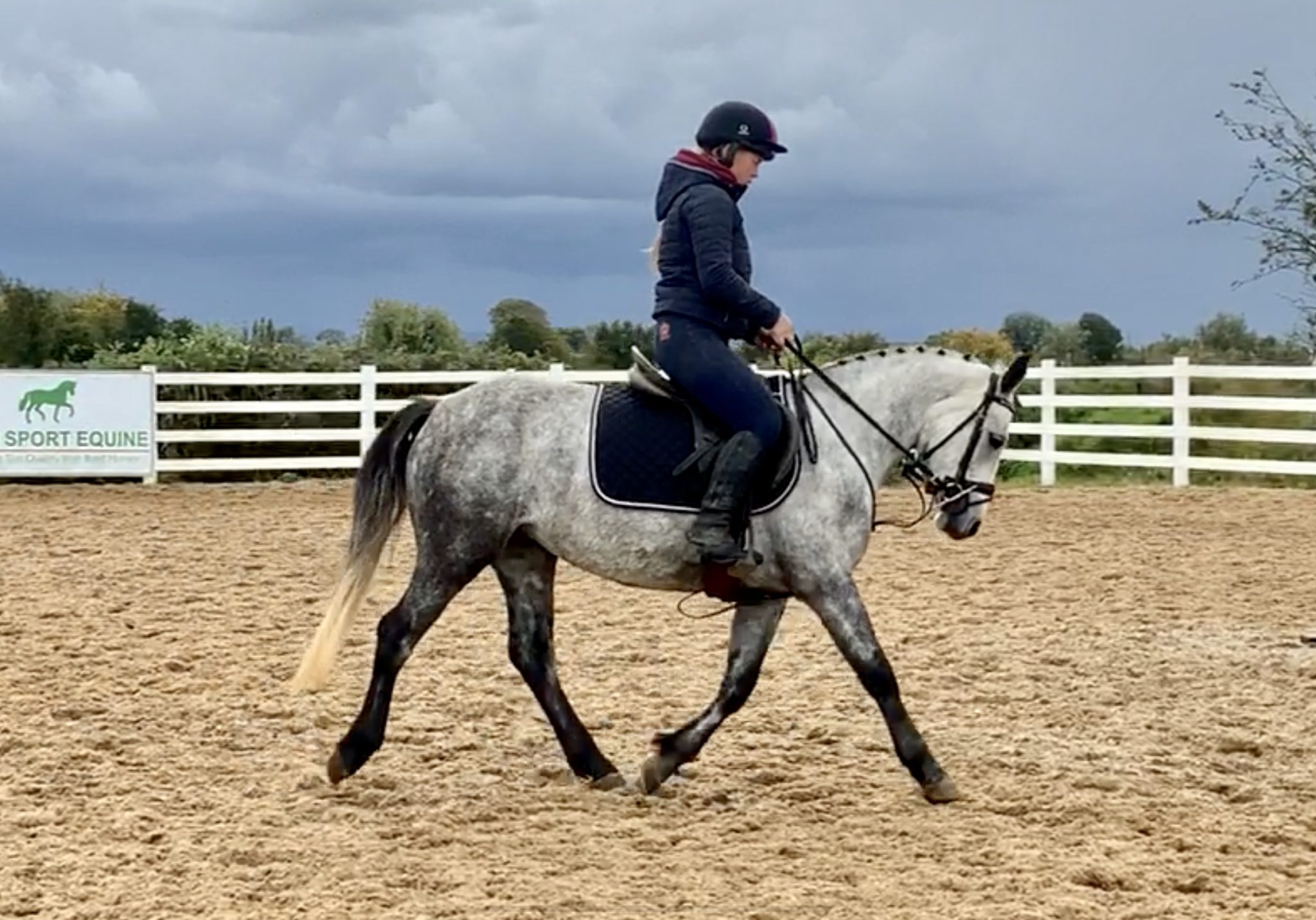 Pretty Missy - outstanding Connemara with HOYS quality!
