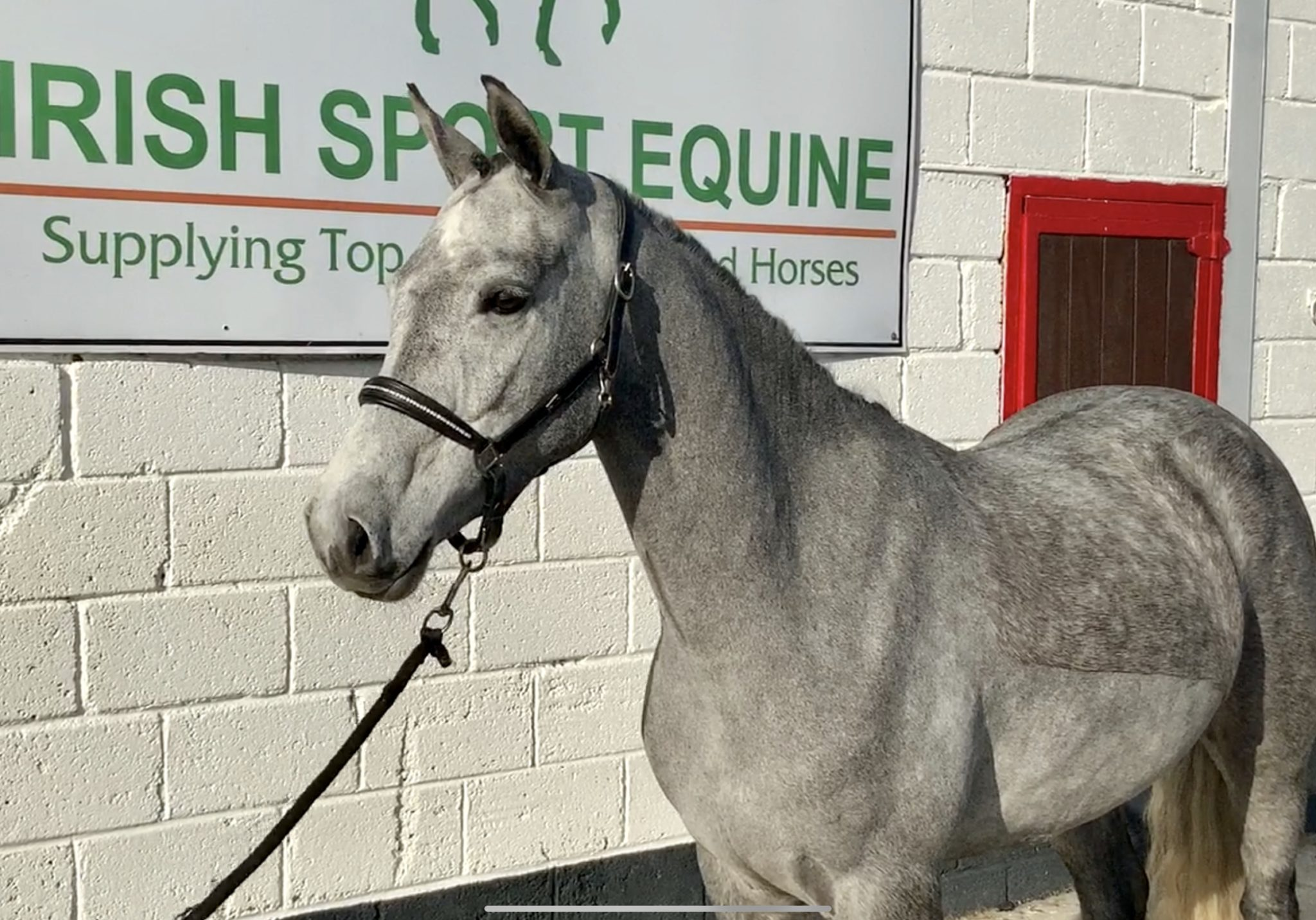 Princess - super pretty mare with excellent jump and movement!