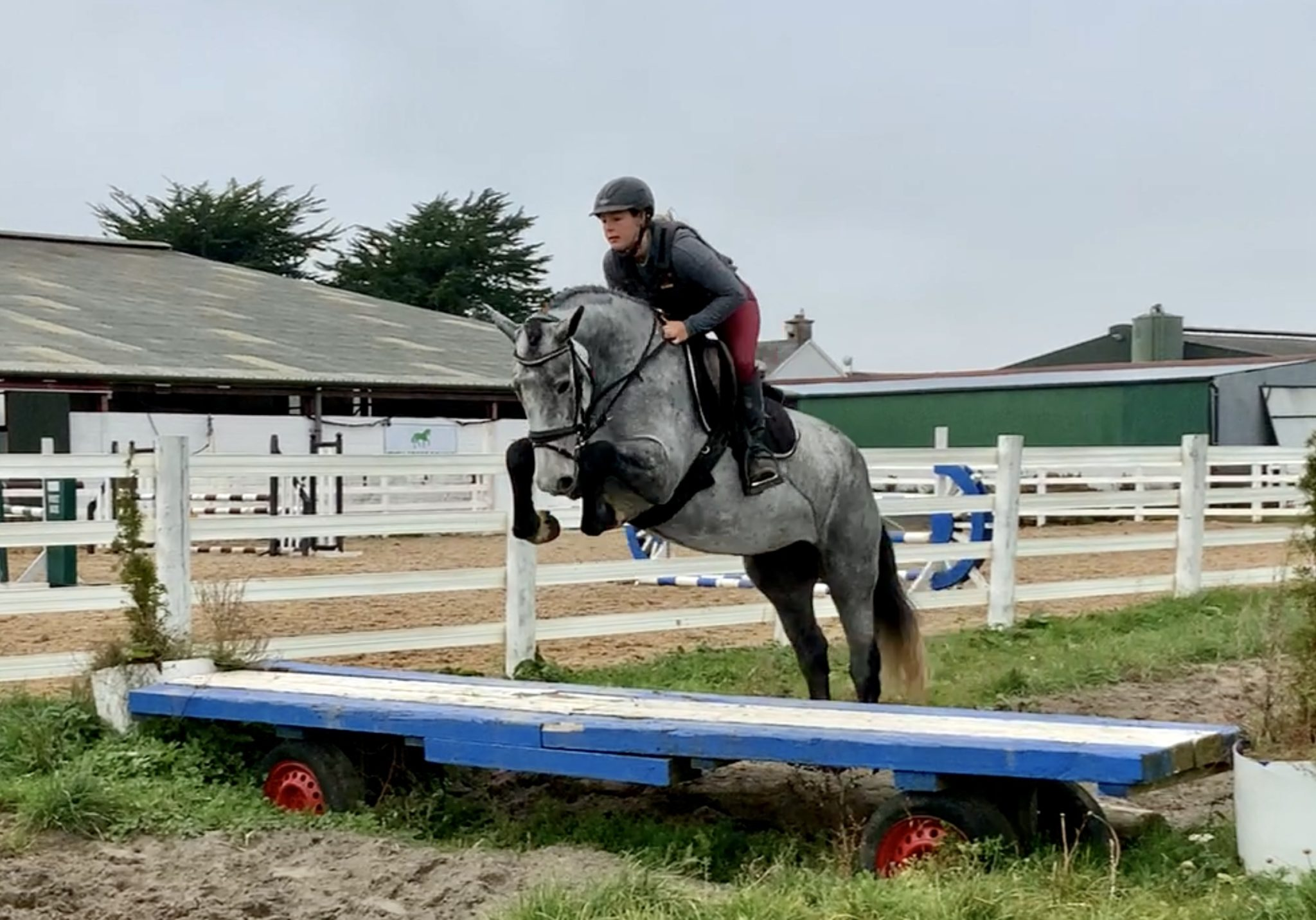 Cassy - potential working hunter!